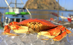 Dungeness_Crab_Cooked.jpg