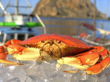 FLASH SALE - Whole Cooked Dungeness Crab