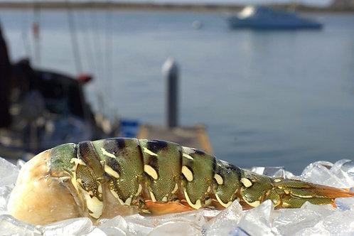 Australian Lobster Tail (16-20 oz)