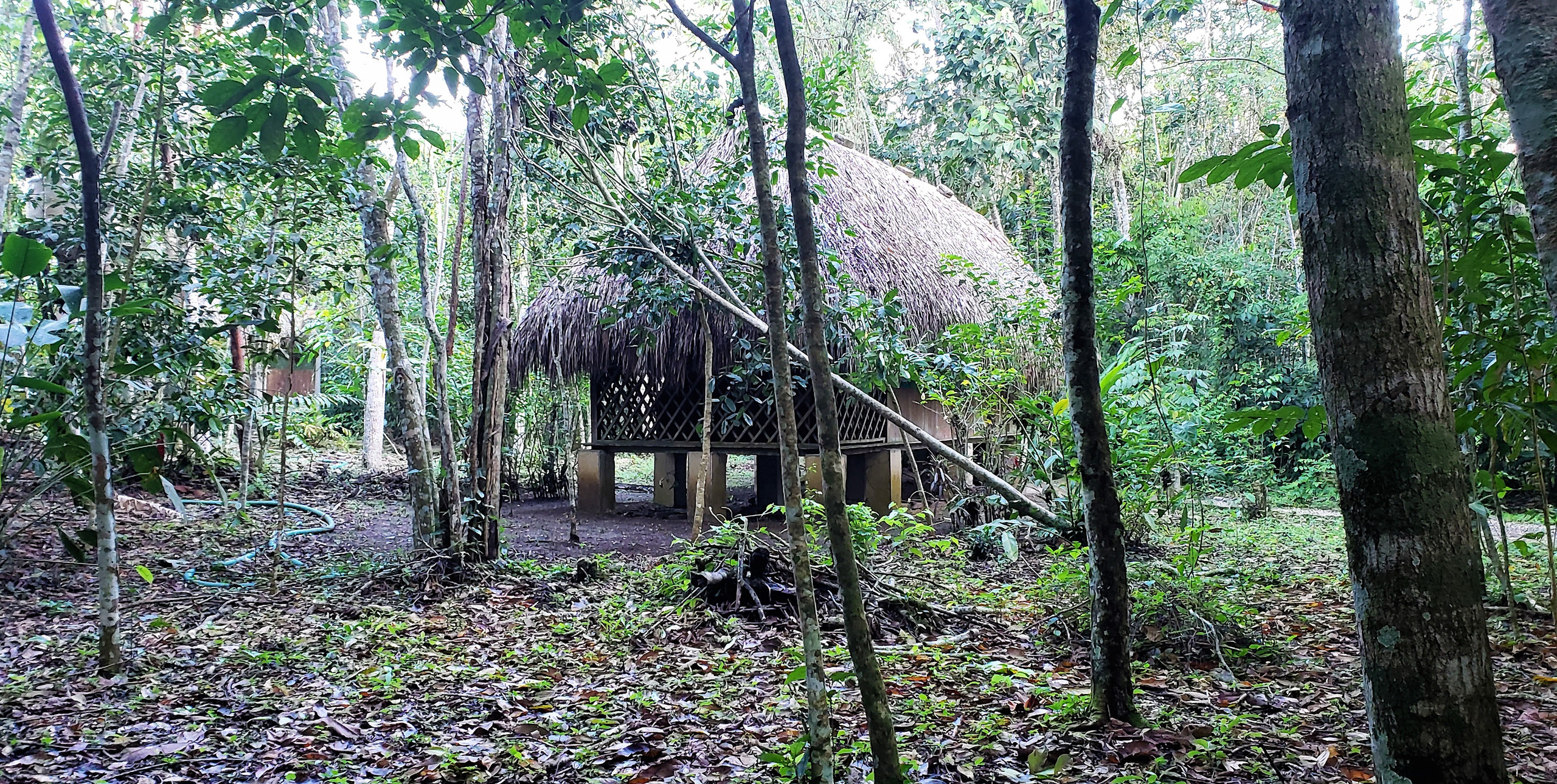 One of the guest cabins at Top Che Ecolodge