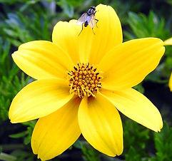 Turkish flower.jpg