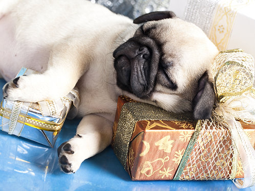 Sleeping Puppy Holiday Card