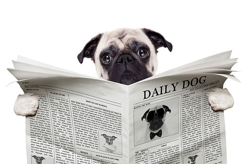The Daily Dog Note Cards