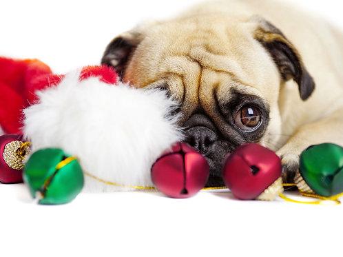Watching For Santa Holiday Card
