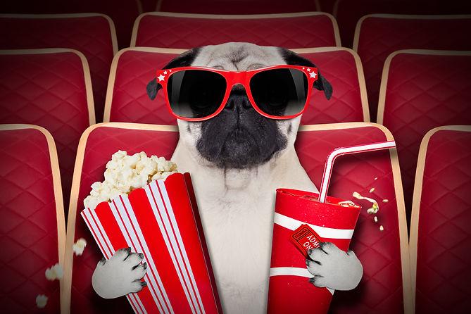 dog-at-the-movies-525210723_3869x2579.jp
