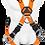 Thumbnail: ARNES 6 ARGOLLAS EN X