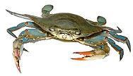 Crab Photo.jpg