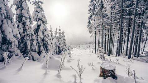 Winter mood I.