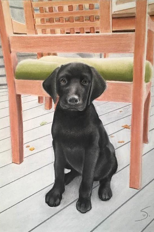 """Full Body Pet Portrait  20""""x14"""" (with background)"""