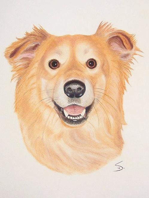 """Head&Neck Pet Portrait  20""""x14"""" (no background)"""