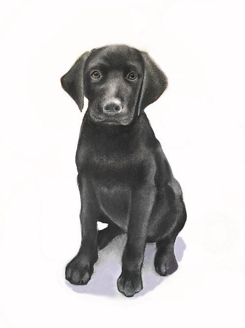 "Full Body Pet Portrait  20""x14"" (no background)"