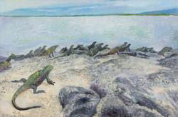 Iguanas1