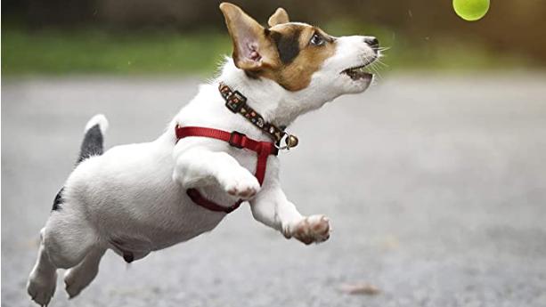 Hyper Pet Tennis Balls For Dogs (Pet Safe Dog Toys for Exercise, Training, Hyper