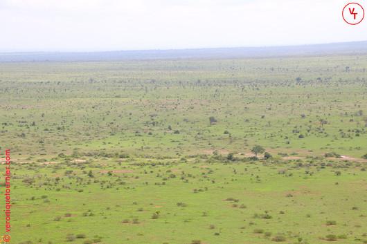 Série Out of Africa, Kruger parc et ses environs, Afrique du sud, 2018.