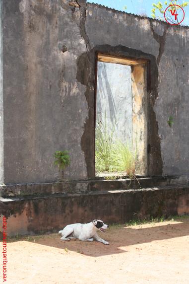 Madagascar, 2006.