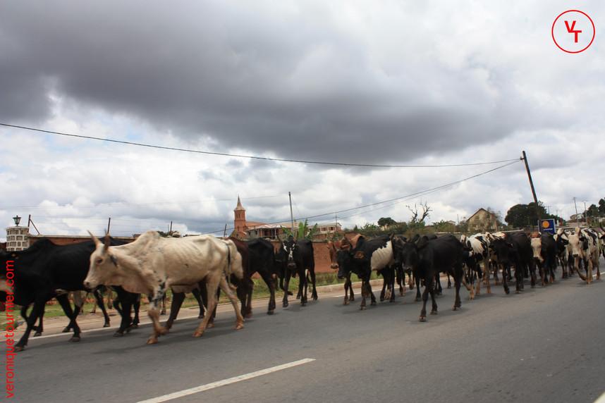 Madagascar, 2011.