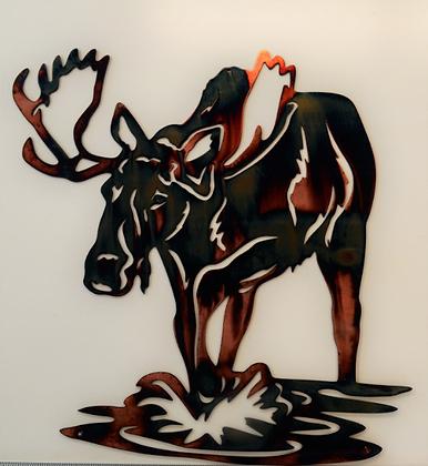 Water Bull Moose