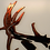 Thumbnail: Barbed Wire Buck
