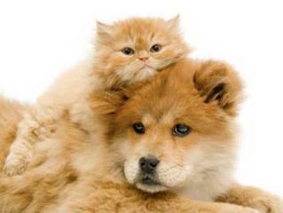 Reiki pour Chien et Chat