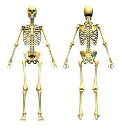 骨格から整える