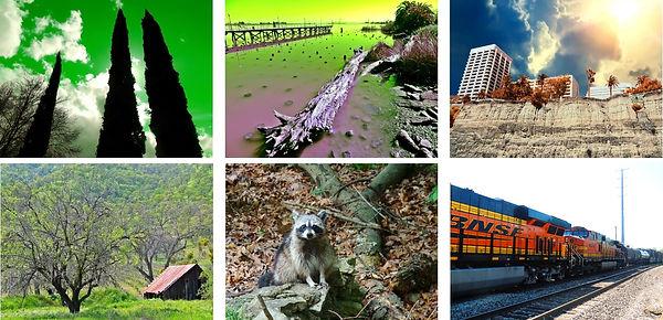 Photography Pics.jpg