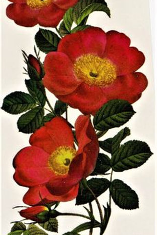 Blume Rotgelb realistic