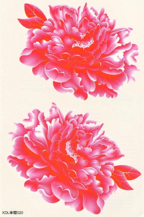 Wasserrose pink