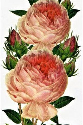 Blume Rose realistic