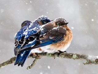 7 TIPS FOR SUCCESSFUL WINTER BIRD FEEDING