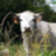 concours agricoles montesquieu volvestre