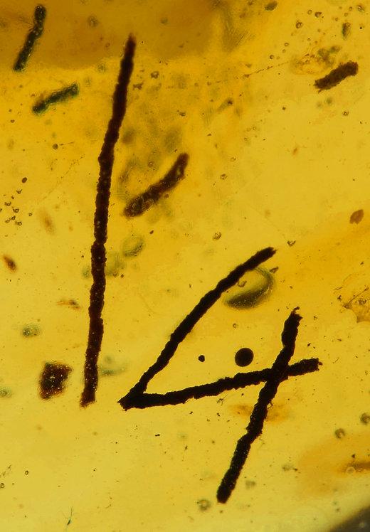 BURMITE AMBER - 18.68 CTS.