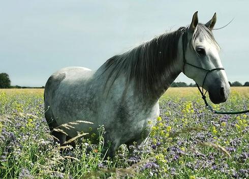 Reittherapie Coaching Pferd