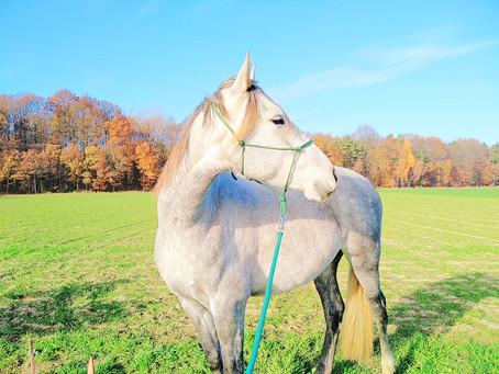 Ein Pferd wider Willen