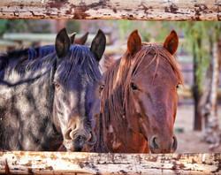 Horses on Ranch Koiimasis