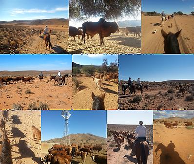 Ranch Koiimasis in the south of Namibia offers a unique riding adventure for western riders and those who want to become one. Die Ranch Koiimasis im süden Namibias bietet ein einmaliges Reitabenteur für Westernreiter und solche die es werden wollen.