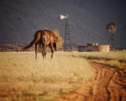 Ranch Koiimasis windmill