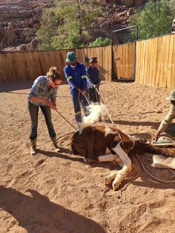 Ranch Work
