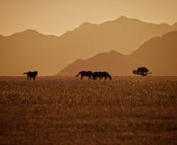 wildhorse sunset