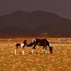 Pferde und Oryxherde
