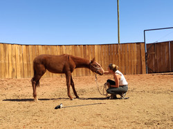 Training the fillies