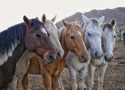 Some of our riding horses