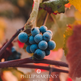 The youth given by the Red Vine