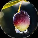 Bio Olive Extract