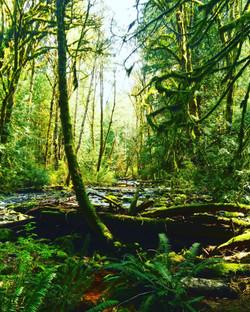 Sooke, Vancouver Island