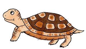 Delphi's Tortoise