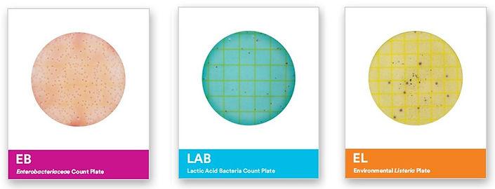 3M Standard Petrifilm 2.jpg