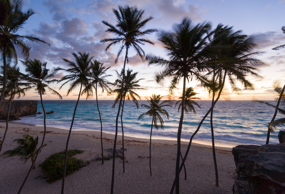 Dacing Palms