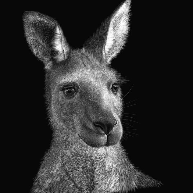 Eastern Grey Kangaroo Portrait