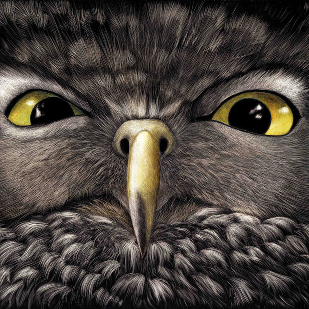 Owl dare you