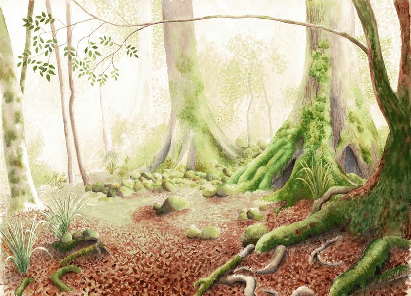 Mt Allyn rainforest